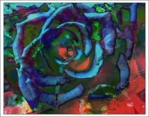 Christmas Rose Blend
