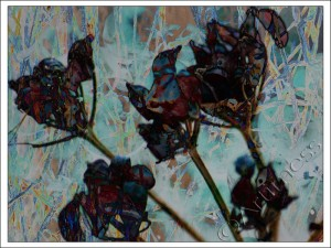 Fragmented Seed Heads 2